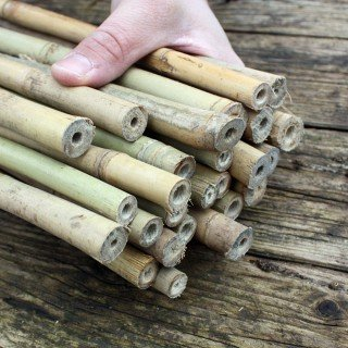Bambú varillas de bambú tubos 105 cm/15 - 17 mm para insectos ...