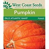 Pumpkin Seeds - Dill's Atlantic Giant