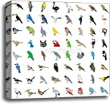 Big Collection Of Birds Gallery Wrapped Canvas Art (20in. x 20in.)