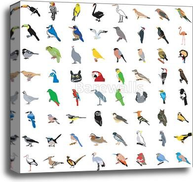 Big Collection Of Birds Gallery Wrapped Canvas Art (20in. x 20in.) by barewalls