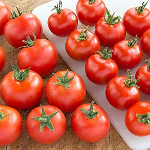 Tomato Plants 3 in 9cm Pots Gardeners Delight Available Now!
