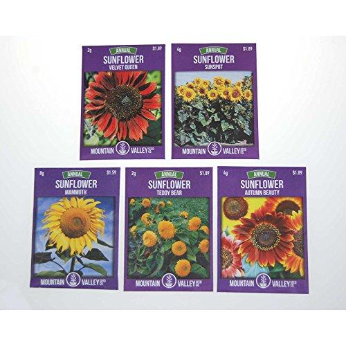 Annual Sunflower Garden Seeds Variety