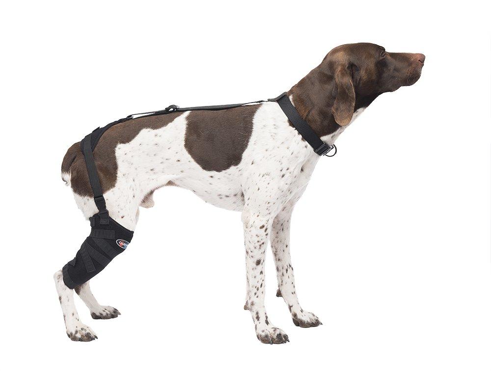 CALDERA Pet Therapy Wrap - Tall Stifle - Medium by Caldera