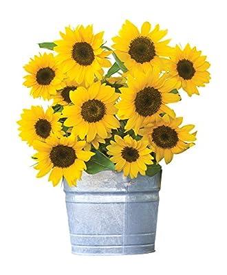 Burpee Sunny Bunch Sunflower Seeds 25 seeds