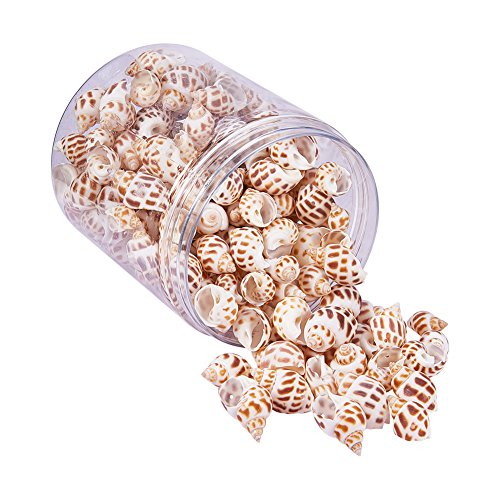 (PandaHall Elite 1Box About 140-160Pcs Snail Sea Shells Dyed Beads Charms Holes Craft Jewelry DIY Making Home Deco 32-45mm Length)
