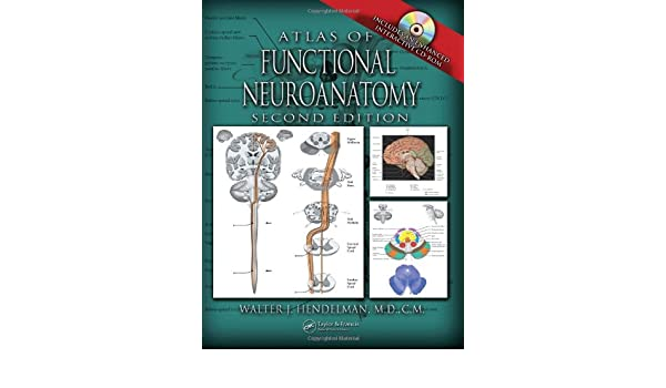 Atlas of Functional Neuroanatomy, Second Edition: Amazon.es: Walter Hendelman M.D.: Libros en idiomas extranjeros