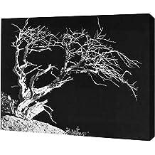"""PrintArt GW-POD-23-AK-RC-2080-16x13 """"Bodi Tree"""" by Albert Koetsier Gallery Wrapped Giclee Canvas Art Print, 16"""" x 13"""""""