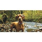 Coastal Pet Products DCP36922BRY K9 Explorer 1-Inch Dog Collar, Medium, Berry