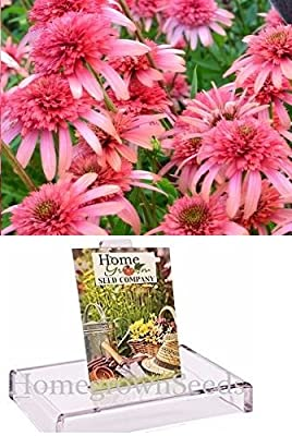 Homegrown Packet Coneflower Seeds, 25 Seeds, Secret Passion