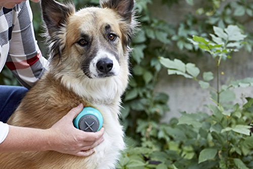 PetWell All-Over Handheld Massage Roller for All Size Pets (Dogs, Cats) by PetWell (Image #4)
