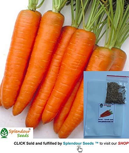Splendour Seeds Carrot Seeds Variety Kurodo Garden Vegetable Seeds