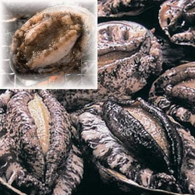 新鮮市場【40-50g】生冷蝦夷あわび 生食可 殻付 ギフト プレゼント 海産物 母の日 父の日