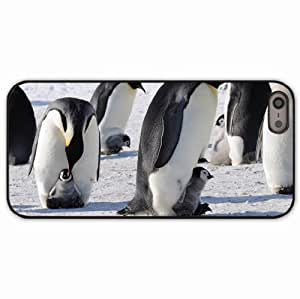 iPhone 5 5S Black Hardshell Case penguins emperor arctic flock Desin Images Protector Back Cover