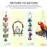 Zacro 7 pcs Bird Swing Toys - Parrot Colorful