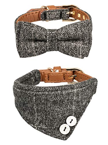 Gyapet is the best Kitten Collar? Our review at cattime.com uncovers all pros and cons.