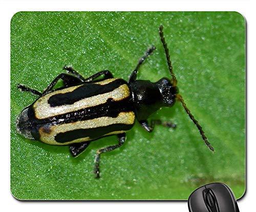Mouse Pads - Beetle Flea Beetle Alligatorweed Flea Beetle Bug