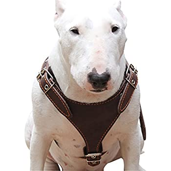 Amazon.com : Brown Genuine Leather Dog Harness, Medium. 25
