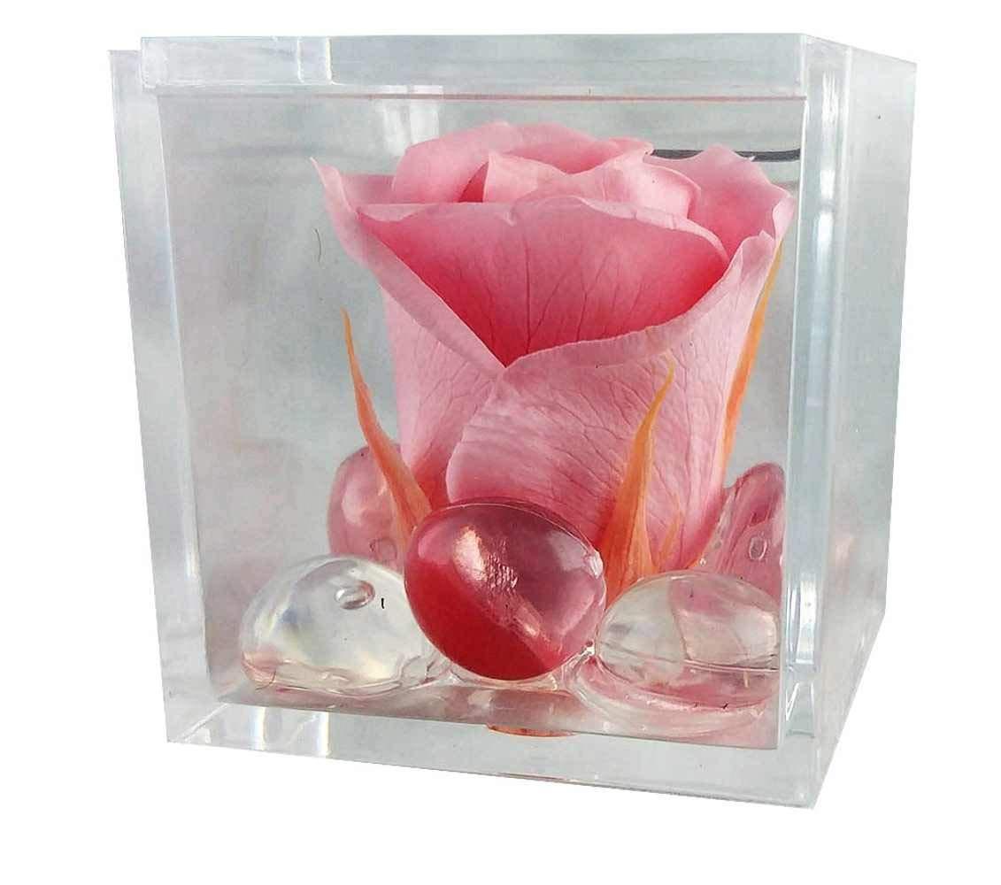 magicostore Rosabella Rosa stabilizzata Pink in Mini cubo plexiglas 5x5x5cm Rosa
