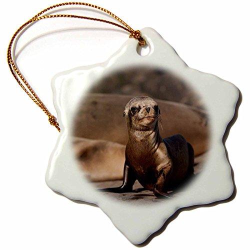 3dRose Danita Delimont - Seals - USA, California, La Jolla. Baby sea lion on sand. - 3 inch Snowflake Porcelain Ornament ()