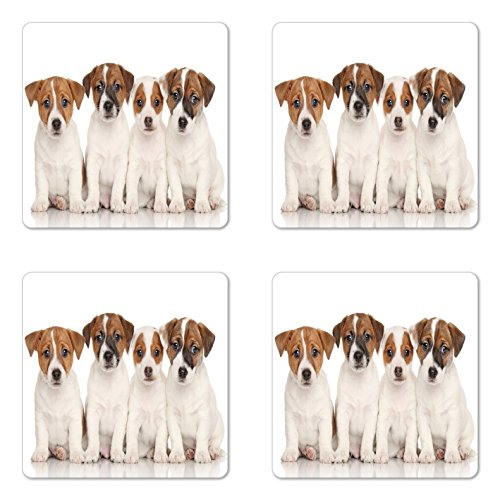 Terrier Clubs Jack Russell - Lunarable Cute Coaster Set of Four, Group of Jack Russell Terrier Puppies Best Friends Domestic Pets Baby Dogs, Square Hardboard Gloss Coasters for Drinks, Brown White Black