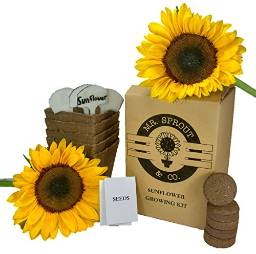Mr. Sprout Sunflower Starter Kit - Plant Growing Kit for Kids, Adults Or Gift Idea - Flower Seed Starter Kit Includes Peat Pots, Nutrient Rich Soil Pellets, and Plant Tags