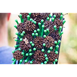 Stab-A-Nut Sweet Gum Ball Harvester