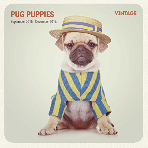 Pug Puppies 16 Month 2016 Vintage Wall Calendar