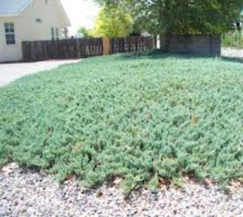 juniper blue rug - 9
