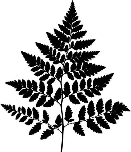 Tree Wall Decals - Fern Leaf Plant life Silhouette - 12 inch Removable Graphics (4 same)