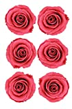 ROSA DORMANT Preserved Roses   Natural Roses that last for Months - Enchanted Dark Pink Roses   Used by Enthusiast Florists instead of Artificial Roses   Alternative Fresh Cut Rose for delivery
