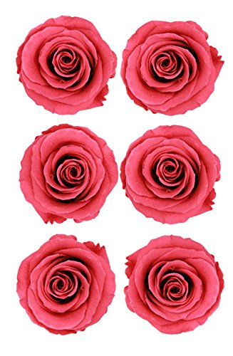 - ROSA DORMANT Preserved Roses | Natural Roses That Last for Months - Enchanted Dark Pink Roses | Used by Enthusiast Florists Instead of Artificial Roses | Alternative Fresh Cut Rose for delivery