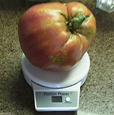 Hungarian Heart Tomato Seed ,A.K.A,Oxheart Tomatoe,Open Pollinated !HUGE Tomato! ( 25 seeds )