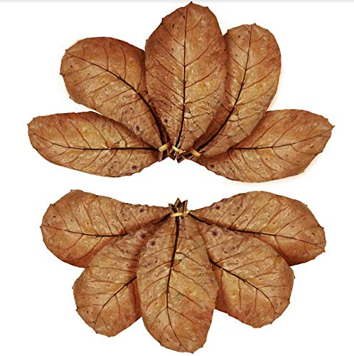 SunGrow Catappa Indian Almond Leaves, Best Way to Create Tropical Rainforest Environment for Betta & Gouramis, Beneficial Leaf Turns Water Black & Boosts Health and Breeding Chances