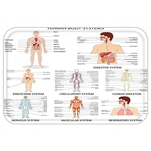 VROSELV Custom Door MatHuman Anatomy Complete Chart of Different Organ Body StructureCell Life Medical Illustration Multi by VROSELV
