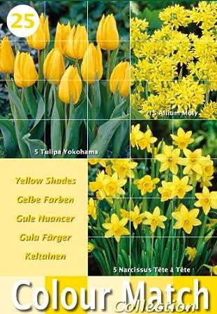 Greenbrokers Ltd Colour Harmony Lot De 25 Bulbes A Fleurs Melange