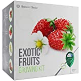 Exotic Fruits Growing Kit - Everything Included to Easily Grow 4 Unique Fruits - Strawberries, Goji Berries, Honeydew, Watermelon + Moisture Meter