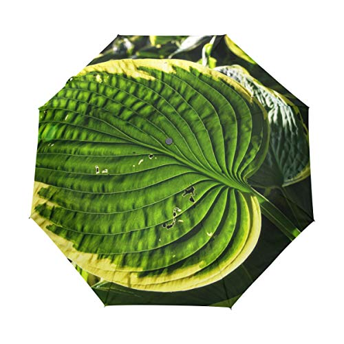 (MALPLENA Hosta Three fold Automatic Open Umbrella Portable?Fits Men/Women/Gift)