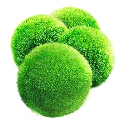 4 LUFFY Giant Marimo Moss Balls --- Aesthetically Beautiful & Create Healthy Environment - Low-Maintenance - Suit All aquarium sizes - Shrimps & Snails Love Them