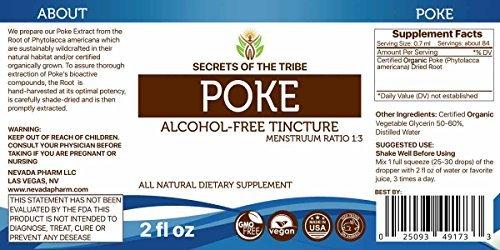 Poke Alcohol-FREE Liquid Extract, Organic Poke (Phytolacca americana) Dried Root (2 FL (Poke Root Herb)