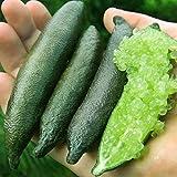 Davitu 20 Pcs/Pack Finger Limes Citrus Orange Seeds Garden Balcony Bonsai Fruit Tree Seed Planting - (Color: Green)