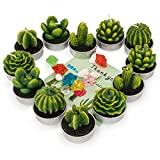 amasky Cactus Tealight Candles, Handmade Delicate Succulent Cactus Candles for Valentine's Day Birthday Party Wedding Spa Home Decoration, 12 Pcs in Pack.
