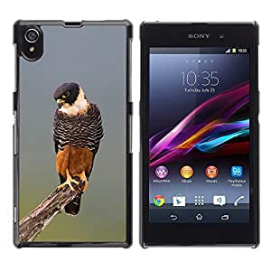 A-type Arte & diseño plástico duro Fundas Cover Cubre Hard Case Cover para Sony Xperia Z1 L39 (Hawk Orange Nature Hunting Fauna Bird)