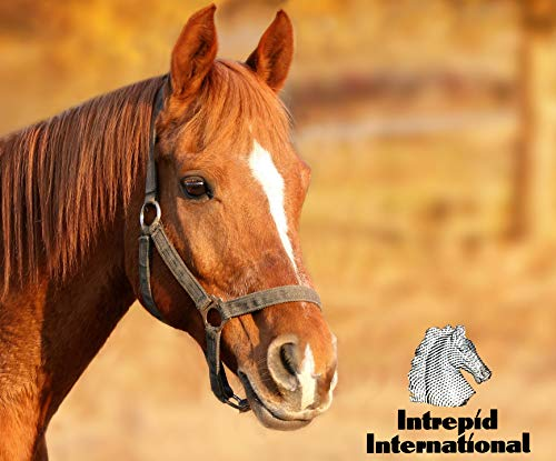Buy horse hoof picks