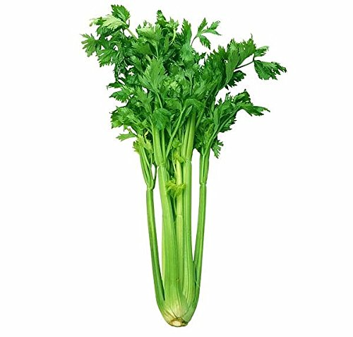 - 1000+ ORGANICALLY GROWN Kintsai Chinese Dark Green Celery Seeds Heirloom NON-GMO Non-bitter, Crisp, Juicy, Delicious and Flavorful, From USA