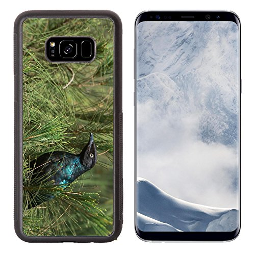 Liili Premium Samsung Galaxy S8 Plus Aluminum Backplate Bumper Snap Case A Long Tailed Starling Lamprotornis chalcurus perched in an casuarina tree - Casuarina Stores