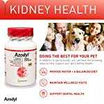 Vetoquinol Azodyl Kidney Health Supplement for Dogs & Cats, 90ct - Probiotic Pet Well-being - Help Support Kidney Function & Manage Renal Toxins - Renal Care Supplement - Easy-to-Swallow Small Caps 12