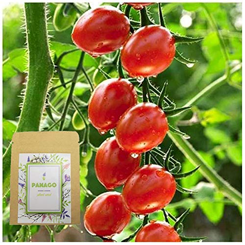 (200+ Cherry Tomato Seeds for Garden Planting, Non-GMO Organic Heirloom Green Vegetable Seeds)