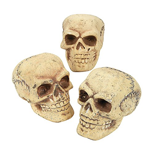 Fun Express Halloween Skeleton Skulls by Spookville -