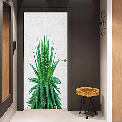 Onefzc Door Wall Sticker Plant Medicinal Aloe Vera with Vibrant Colors Indigenous Species Alternative Natural Remedy Mural Wallpaper W32 x H80 Fern Green