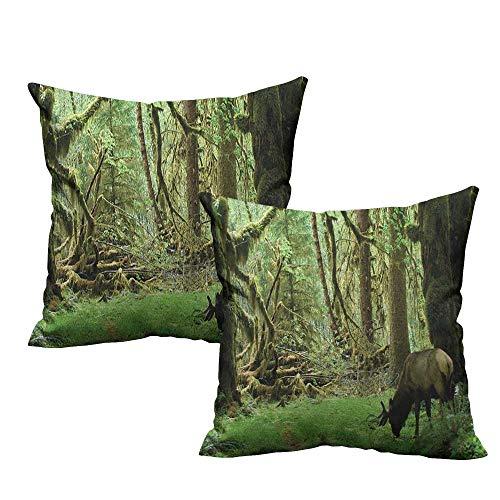 (RuppertTextile Simple Pillowcase Rainforest Roosevelt Elk in Rainforest Wildlife National Park Washington Antlers Theme Mildew Proof W20 xL20 2 pcs)